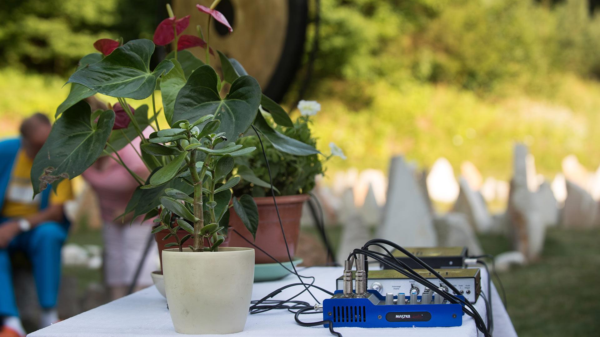 Glasba rastlin, obisk gostov iz Damanhurja