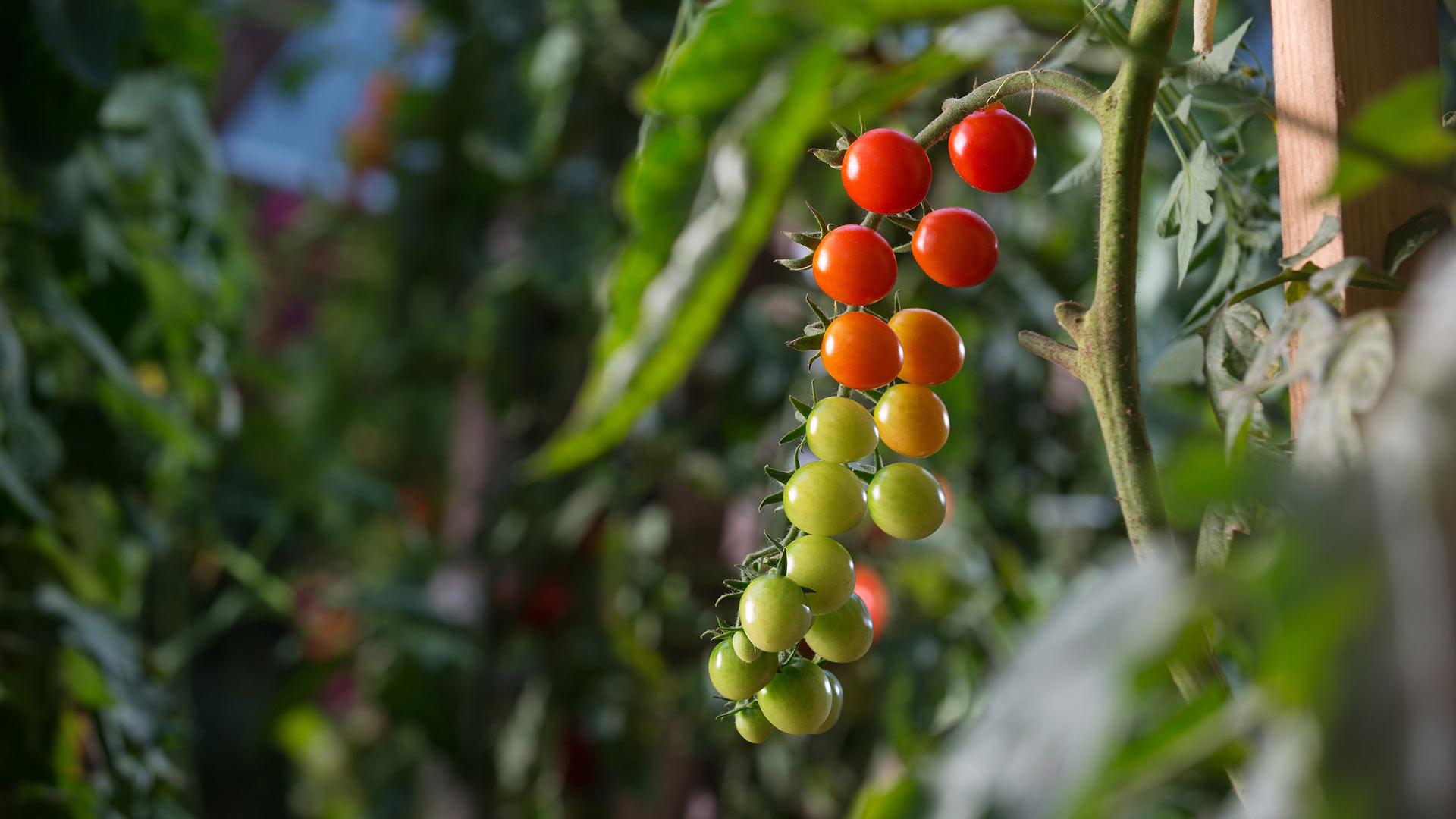 Pridelava lastne hrane oz. samooskrba je eden izmed ciljev skupnosti